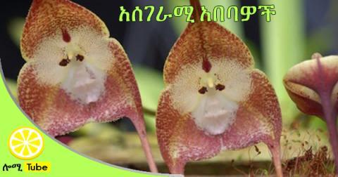 World's 13 Weirdest Flowers